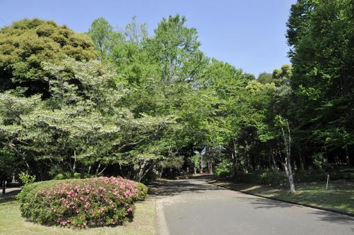 Komazawa park of fresh green
