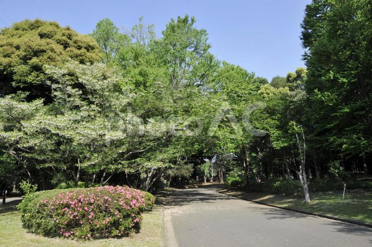 新緑の駒沢公園の写真