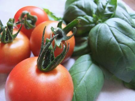 Mini tomatoes and basil