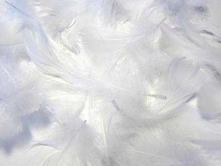 하얀 깃털