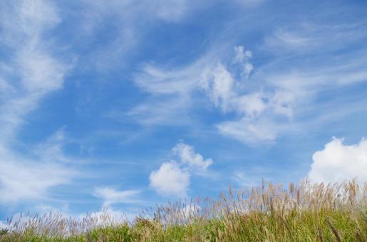 Susuki and autumn sky