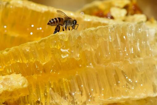 World of Nectar and Bees Immunity SDGs Food Sustainable Close-up Material Background