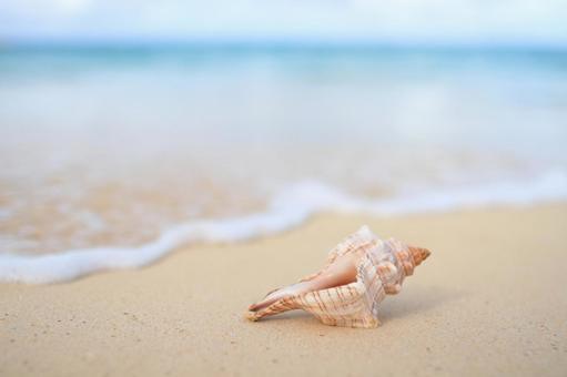 Hawaii beaches and seashells