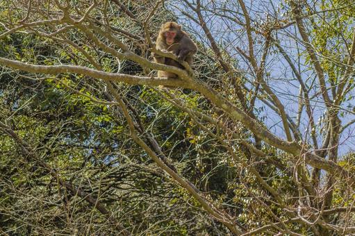 日本猴子在山上4