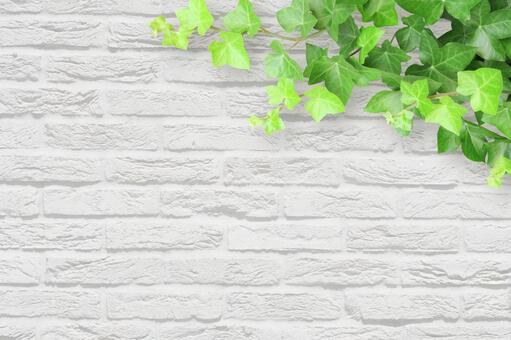 흰색 벽돌 벽과 아이비의 배경 소재