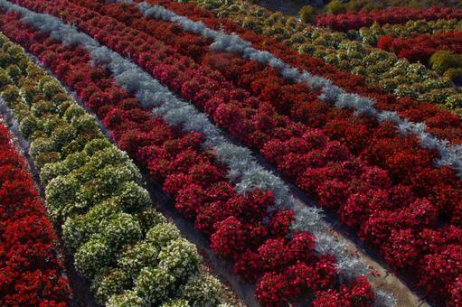 A shrub flower garden