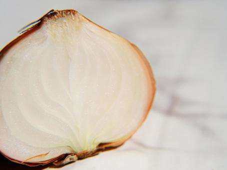 Cross section of onion
