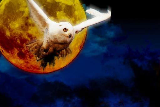 Moon and white owl