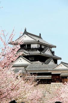체리와 마츠야마 성