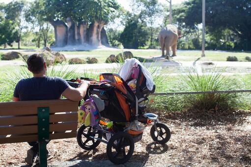 见动物园的父亲和婴儿车2的大象