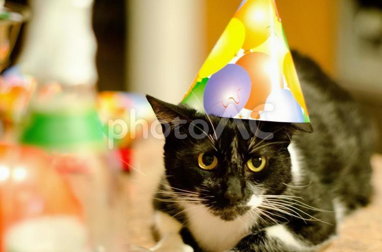 帽子をかぶった猫3の写真