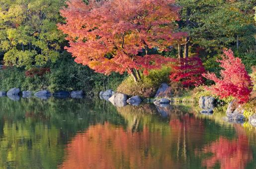 Fall scenery 23