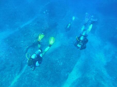 Hawaii Sea 14 Diving