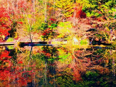 Upside-down autumn leaves reflected on the surface of the water
