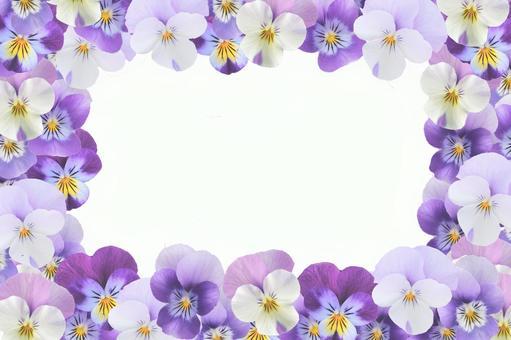 Pale viola frame purple flowers purple spring flowers