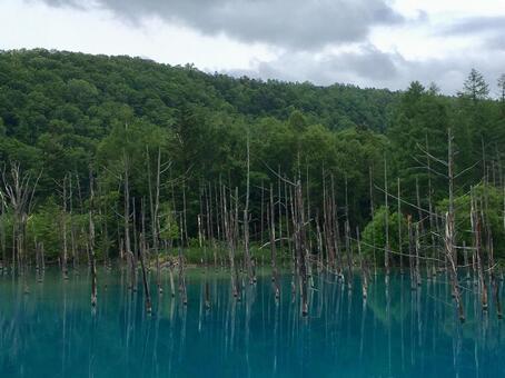 홋카이도 비 에이의 푸른 연못