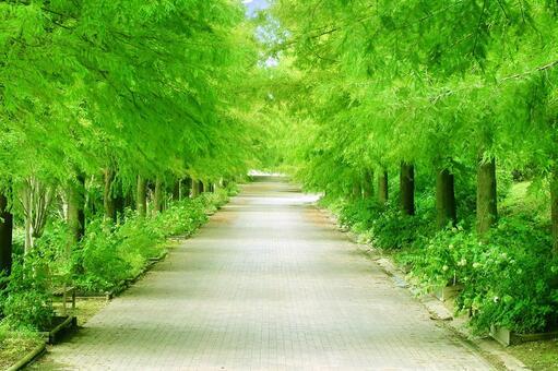 공원의 가로수