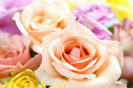 Roses of happy colors