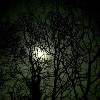 月光夜黑闇月光