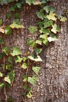 Tree trunk and ivy