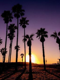Los Angeles Venice Beach Sunset Palm Tree Silhouette