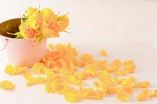 핑크 양동이에 들어간 노란 장미와 바닥에 떨어진 노란 꽃잎