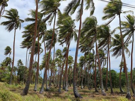 뉴 칼레도니아 여행 우베 아 섬 천국에 가장 가까운 섬