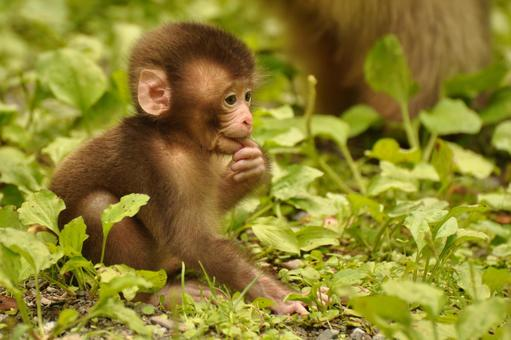 Monkey Record 6