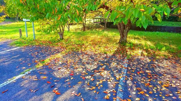 가을의 햇살