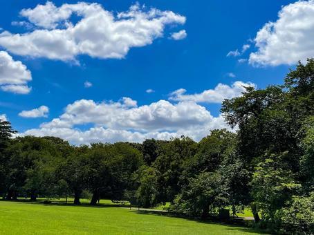 Kinuta Park in summer