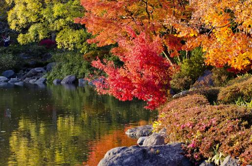 Fall scenery 16