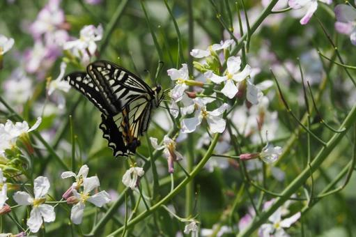 봄 낭만 나비도 꽃도 화려