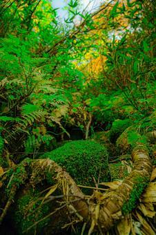 原始森林(第 2 部分)搜索詞 / 原始森林創作者姓名 / YUTO @ PHOTOGRAPHER