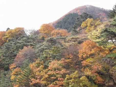 단풍이 들고있는 산