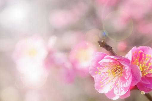 화창한 봄 Ⅱ