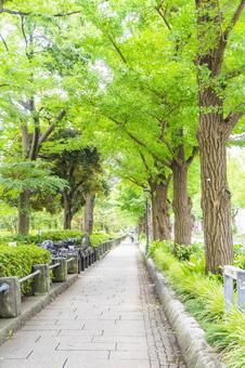 Yamashita Park Street