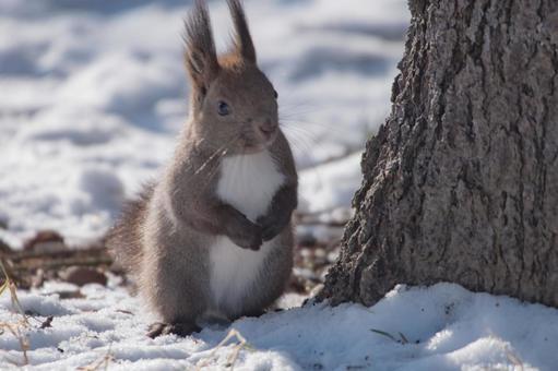 다람쥐 5