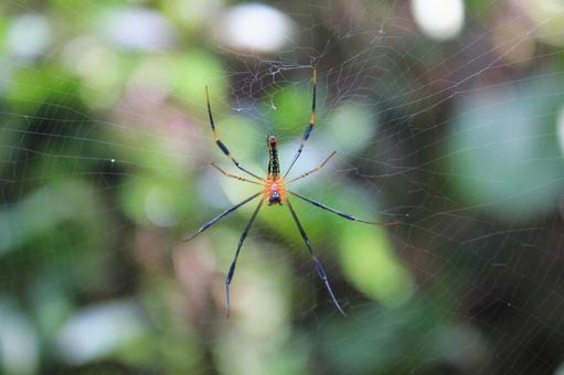 Spider and spider web 2