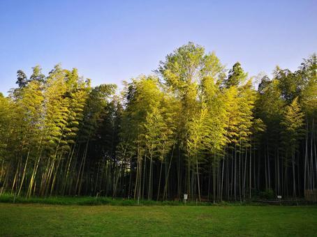 Bamboo yabu bamboo grove