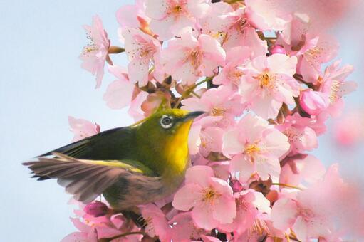 Spring and white-eye