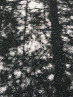 햇살 · 그림자