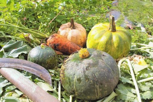 가을의 수확 호박 · 당근 ④