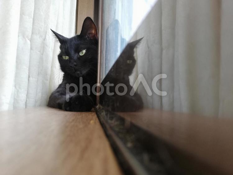 窓際の黒猫の写真