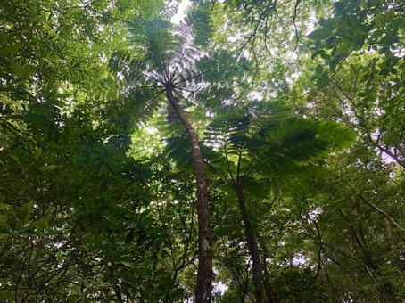 Kinsaku virgin forest 2