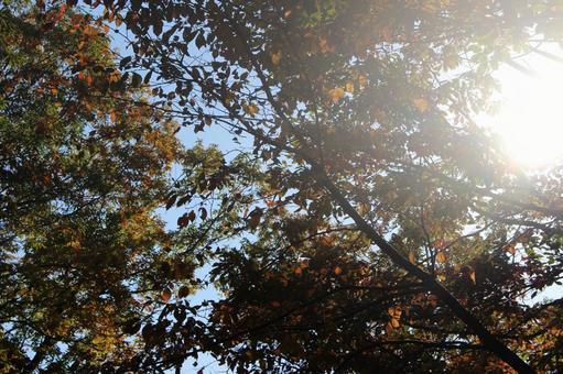 햇살 (가을)