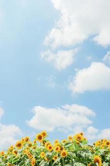 Sunflower full of blue sky ②
