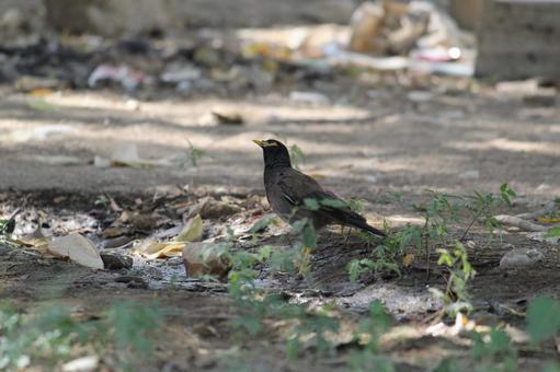 Pakistan Bird 4