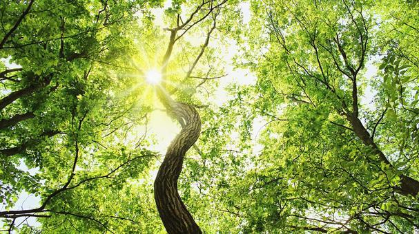 태양을 요구 뻗는 줄기와 지엽