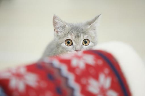 그림자에 숨어 고양이