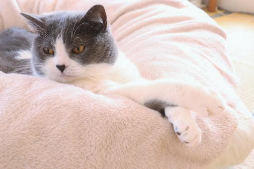손을 뻗어 심심 귀여운 고양이 배경 화면